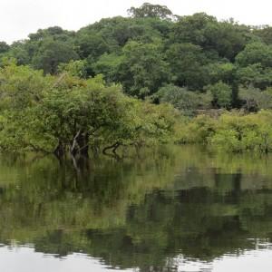 Igarapé Água Fria